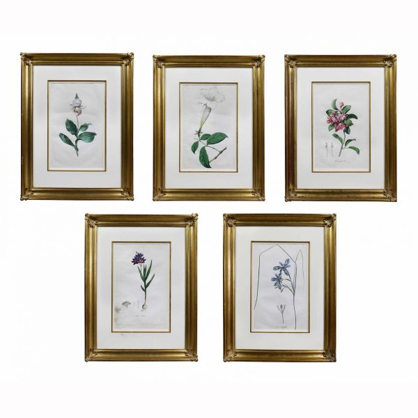 Set of Five Framed Botanicals of Flowers by Hendrik Schwegman